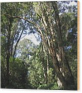 Ironwood Wood Print