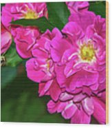 Irresistible Rose - Paint Wood Print