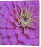 Irridescent Pink Wood Print