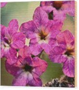 Irridescent Pink Flowers Wood Print