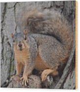 Irritated Squirrel Wood Print