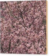 First Spring Blossom Wood Print