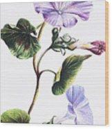 Isabella Sinclair - Pohue Wood Print