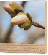 Isaiah 61  V 11 Wood Print
