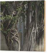 Israel, Tree Trunk Wood Print