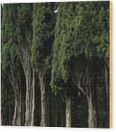 Italian Cypress Trees Line A Road Wood Print