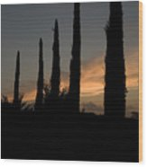 Italian Cypress Trees Silhouetted Wood Print