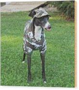Italian Greyhound Army Wood Print