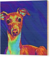 Italian Greyhound  Wood Print by Jane Schnetlage