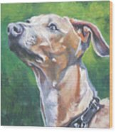 Italian Greyhound Wood Print by Lee Ann Shepard