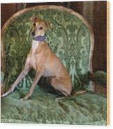 Italian Greyhound Portrait Wood Print