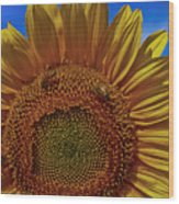 Italian Sunflower With Bees Wood Print