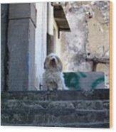 Italy's Capri Doggie Wood Print