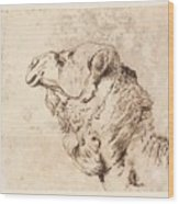 itle Head of a Dromedary Wood Print