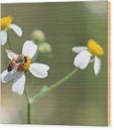 Its A Bee's World Wood Print