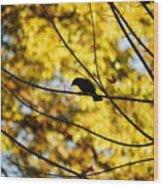 It's A Bird Wood Print