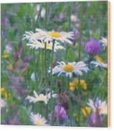 It's A Daisy Kind Of Day Wood Print