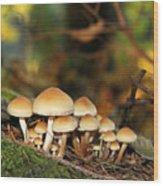 It's A Small World Mushrooms Wood Print by Jennie Marie Schell