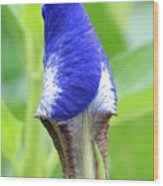 It's A Wrap - Iris Bud Wood Print