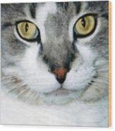 It's In The Cat Eyes Wood Print