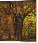 It's Not The Angel Oak Wood Print