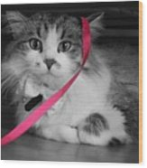 Itz A Cat Wood Print