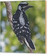 I've Got Your Back - Female Downy Woodpecker Wood Print