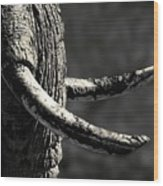 Ivory And Mud Wood Print