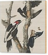 Ivory-billed Woodpecker Wood Print