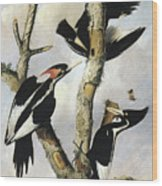 Ivory-billed Woodpeckers Wood Print