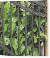 Ivy And Gate Wood Print