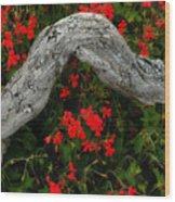 Ivy Geraniums And Log Wood Print