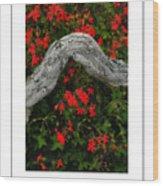 Ivy Geraniums And Log Poster Wood Print