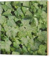 Ivy Green Wood Print
