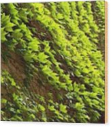 Ivy League-ivy Lines Wood Print