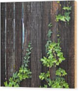 Ivy On Fence Wood Print