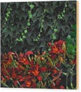Ivy Over Wood Print