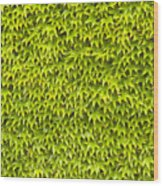 Ivy Wall Wood Print by Andy Smy