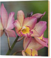 Iwanagara 9936 Wood Print