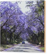 Jacarandas In Pretoria Wood Print