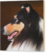 Black Jack- Collie Wood Print