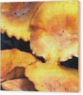 Jack O Lantern Mushrooms Wood Print