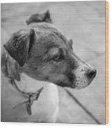 Jack Russell Wood Print