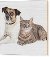 Jack Russell Terrier Dog And Tabby Cat Wood Print
