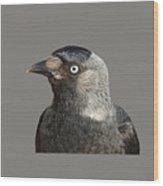 Jackdaw Corvus Monedula Bird Portrait Vector Wood Print
