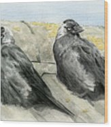 Jackdaws In The Sun Wood Print