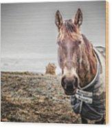 Jacketed Horse Wood Print