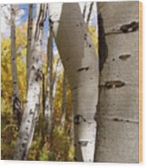 Jackson Hole Wyoming Wood Print