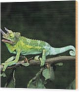 Jacksons Chameleon On Branch Wood Print by Dave Fleetham - Printscapes