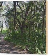 Jackson's Gap Trail Wood Print